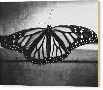 Black Butterfly Wood Print by Julia Wilcox