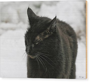 Black Cat White Snow Wood Print