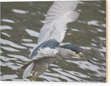 Wood Print featuring the photograph Black Crowned  Night Heron by Amy Gallagher