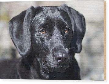 Black Dog Wood Print by Christina Reichl Photography