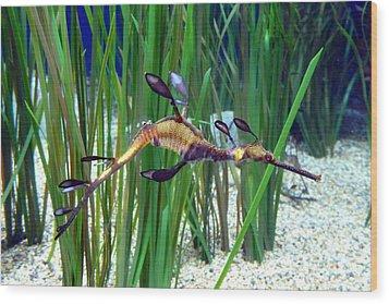 Black Dragon Seahorse Wood Print by Carla Parris