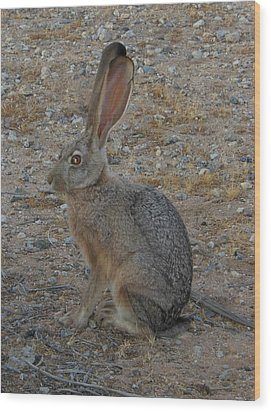 Black Eared Jack Rabbit Wood Print