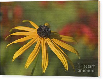 Black-eyed Susan 2 Wood Print by Sharon Talson