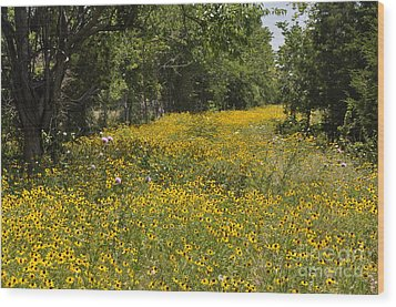 Wood Print featuring the photograph Black Eyed Susan by Cheryl McClure