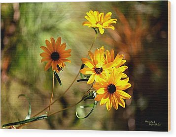 Black Eyed Susans Wood Print by Suzanne  McClain
