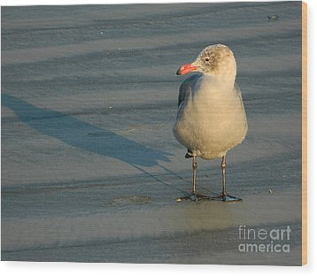 Wood Print featuring the photograph Black Feet by Everette McMahan jr
