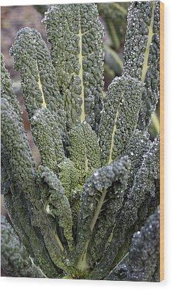 Black Kale (brassica 'nero De Toscana') Wood Print by Maxine Adcock