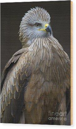 Black Kite 4 Wood Print by Heiko Koehrer-Wagner
