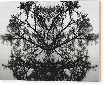 Black Mold Wood Print by Amy Sorrell