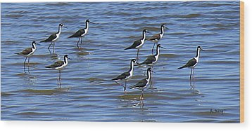 Wood Print featuring the photograph Black-neck Stilt Dressed In Their Best by Roena King