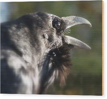 Wood Print featuring the photograph Black Raven Talk by Cindy Wright