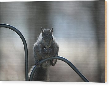 Black Squirrel  Wood Print by Karol Livote