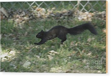 Black Squirrl On Run Wood Print by Yumi Johnson