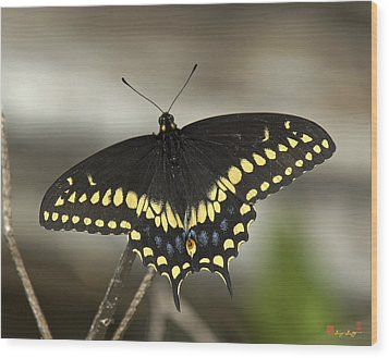 Black Swallowtail Din103 Wood Print