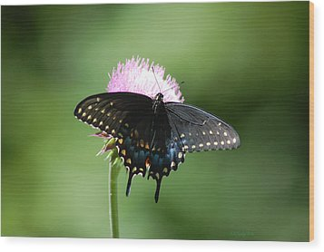 Black Swallowtail In Macro Wood Print