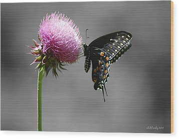 Black Swallowtail With Thistle Wood Print