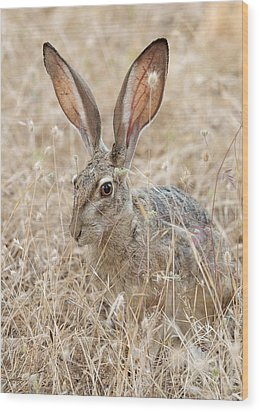 Wood Print featuring the photograph Black-tailed Hare by Doug Herr