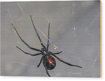 Black Widow Spider Wood Print by Scott McGuire