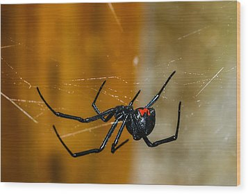 Black Widow Trap Wood Print by David Waldo
