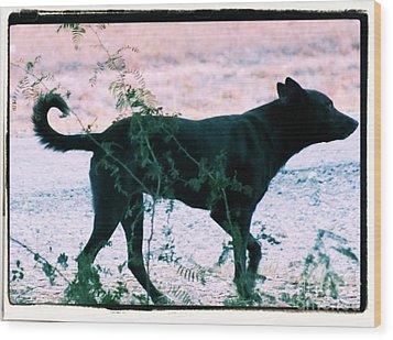 Blackdog Wood Print by Tammy Herrin