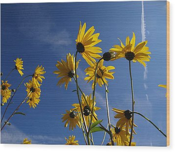 Blackeyed Susans Wood Print by Bruce Ritchie