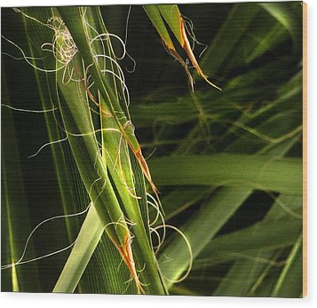 Blades Of Grass Wood Print