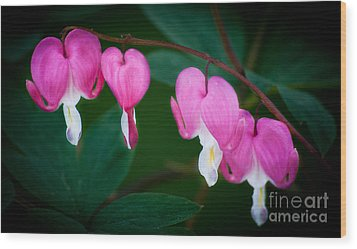 Bleeding Hearts 002 Wood Print by Larry Carr