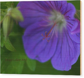 Bloom IIi Wood Print by Jacqui Collett