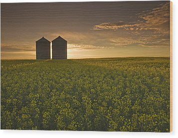 Bloom Stage Canola Field With Grain Wood Print by Dave Reede