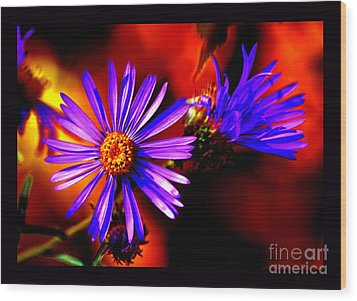 Blooming Asters Wood Print by Susanne Still