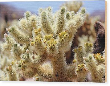 Blooming Cholla Wood Print by Leigh Meredith