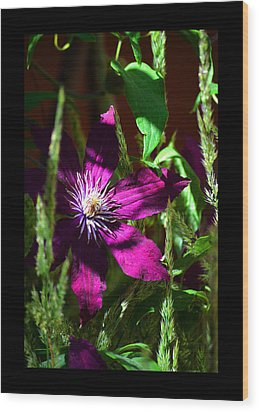 Wood Print featuring the photograph Blooming Clematis by Susanne Still