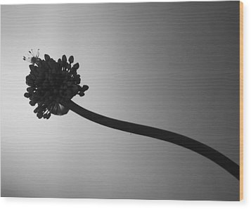 Blooming Wood Print by Ellery Russell