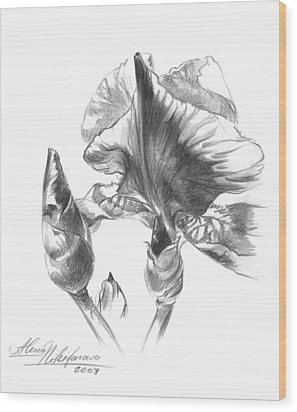 Blooming Iris  Wood Print