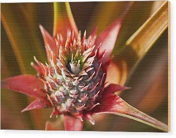 Blooming Pineapple Wood Print by Ron Dahlquist