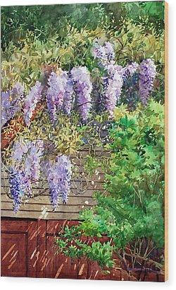 Blooming Wisteria Wood Print by Peter Sit