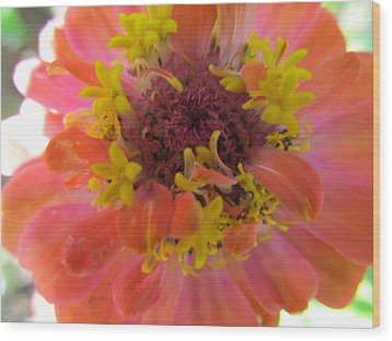 Wood Print featuring the photograph Blooming Within by Tina M Wenger