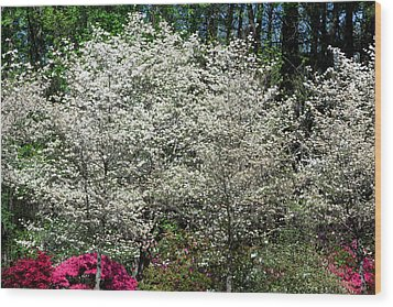 Blossom Explosion Wood Print by Christopher McPhail