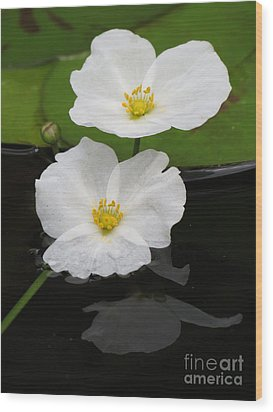 Blossom Reflection Wood Print by Darleen Stry