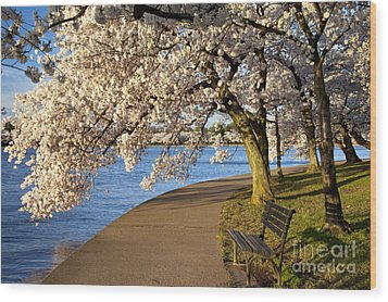 Blossoming Cherry Trees Wood Print by Brian Jannsen