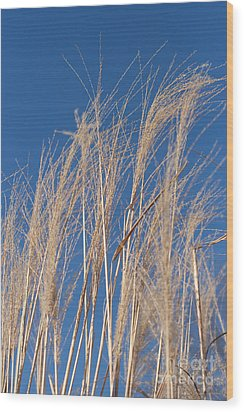 Wood Print featuring the photograph Blowing In The Wind by Barbara McMahon