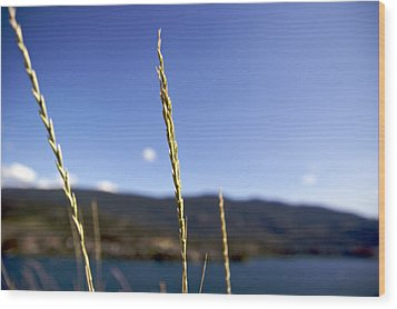 Wood Print featuring the photograph Blowing In The Wind by JM Photography