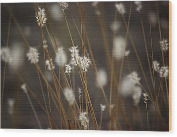 Wood Print featuring the photograph Blowing In The Wind by Vicki Pelham