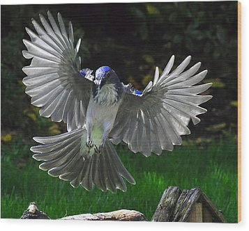 Blue Angel Wood Print