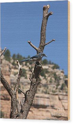 Blue Bird Grand Canyon National Park Arizona Usa Wood Print by Audrey Campion