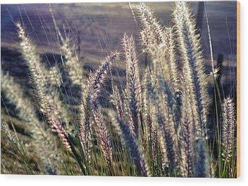 Wood Print featuring the photograph Blue Buffalo Grass by Werner Lehmann