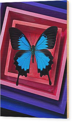 Blue Butterfly In Pink Box Wood Print by Garry Gay