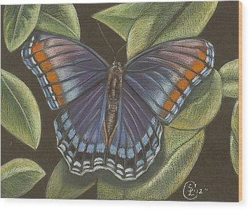 Blue Butterfly  Wood Print by Stephanie L Carr