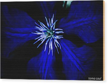 Blue  Clematis Wood Print by Toma Caul