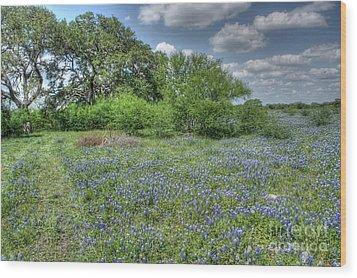 Blue Creek Wood Print by Will Cardoso